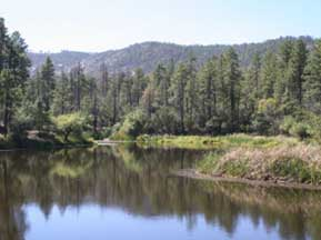 Just A Short Drive From Downtown Crown King Is This Wonderful Little Lake.  It Is A Great Place For A Day Trip To Hike, Or Go Fishing. Img